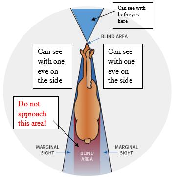 Diagram of safe areas around a horse