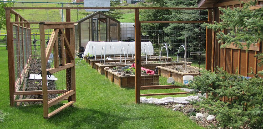 Backyard greenhouse and vegetable garden with raised beds in gardening zone 3 Alberta, Canada.