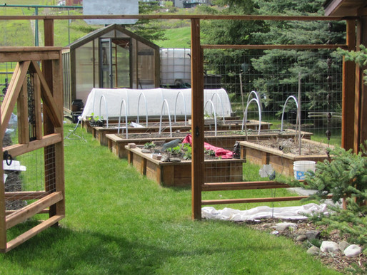 When Should I Plant My Garden?