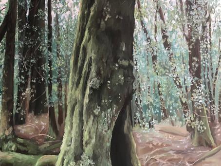 Tassie Tree - Gordon Franklin NP