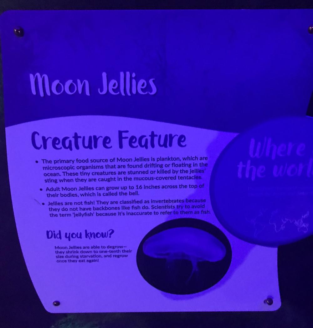 moon jellies, jellyfish, fish, seaquest, jellies