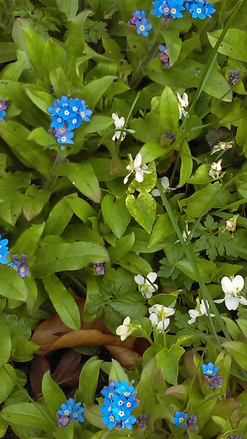Spring flowers, Lottie Gaberle, www.topschooltutoring.com