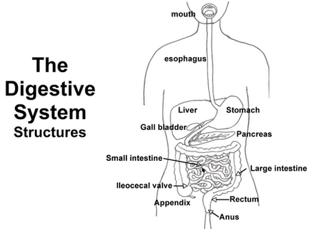LAURA DISCUSSES DIGESTION WITH DR LANI SIMPSON