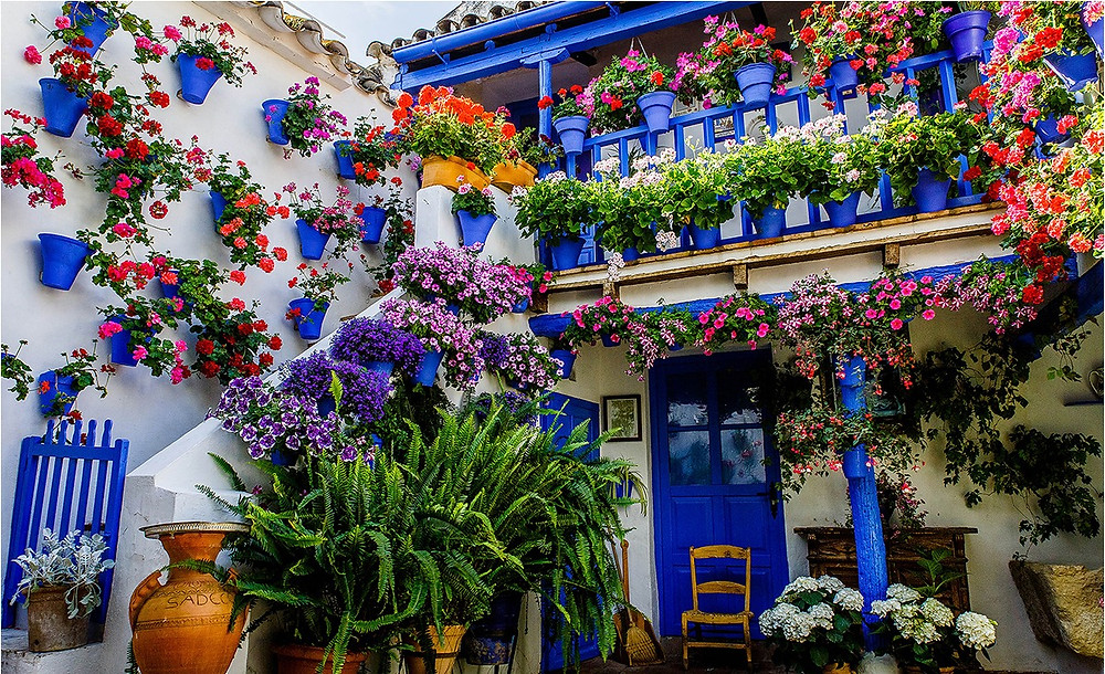 A Cordoba Patio decorated with blue flowerpots and hundreds of geranium flowers