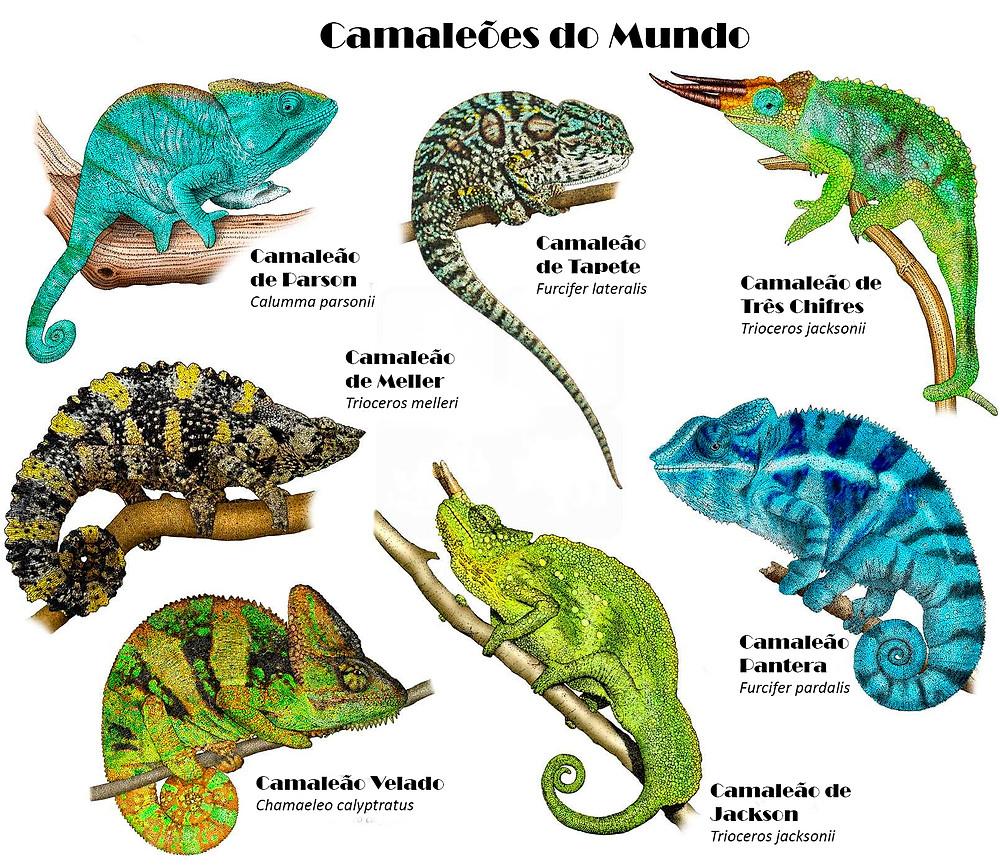 Camaleões do Mundo
