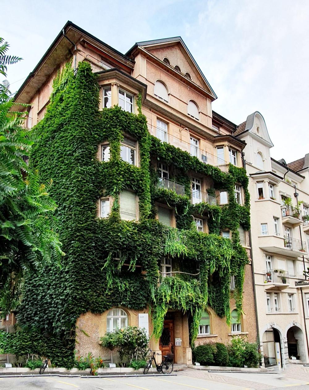 immeuble recouvert de lierre à Lucerne