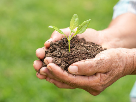 Fertilizante: caminho para a segurança alimentar da África