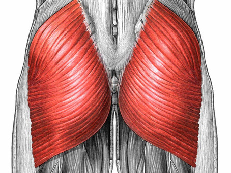 Which Exercises Activate the Gluteus Maximus the Most?