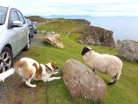 Irska s psom