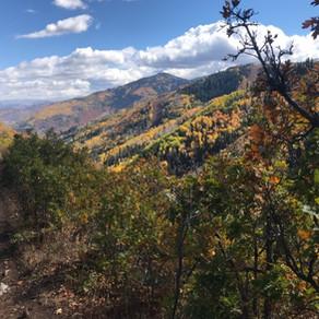Rob's Trail ◉