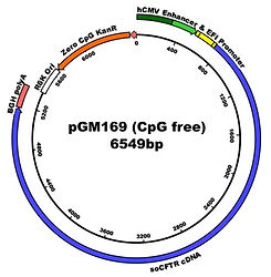 pGM169 (CpG free) 6549bp