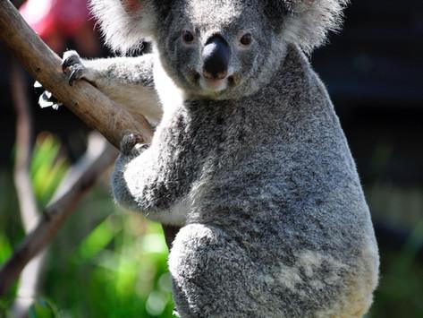 WWF UTILISE DES DRONES POUR REPLANTER LA FORÊT EN AUSTRALIE