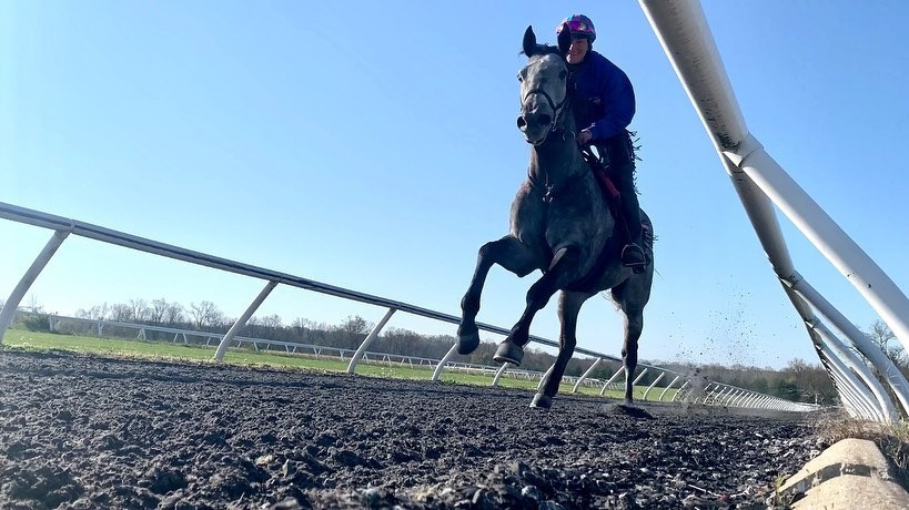 Famous grey racehorses, famous gray horses