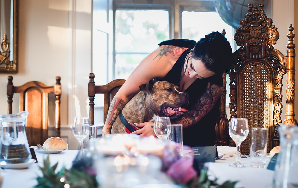 Dog Dining at the Wedding Breakfast