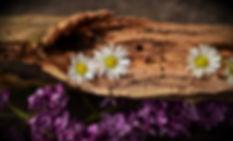 structure-plant-wood-texture-leaf-flower