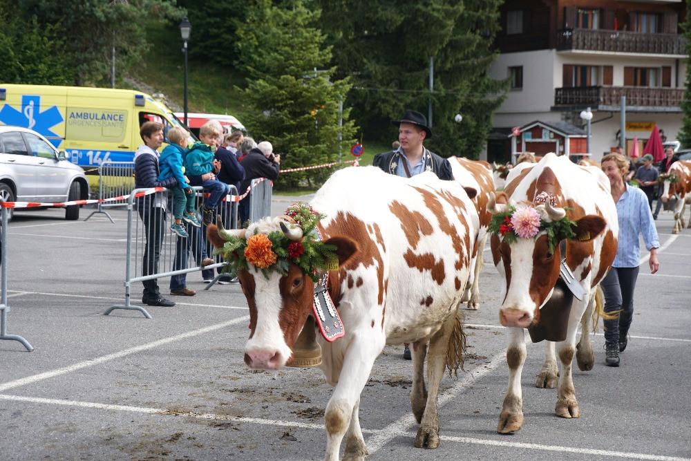 גריון, חגיגות הורדת הבקר, שוויץ