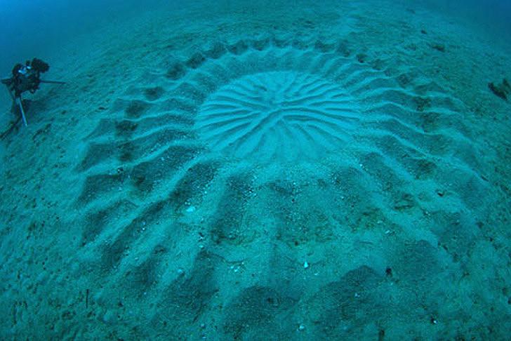 cercles mystérieux japon sable