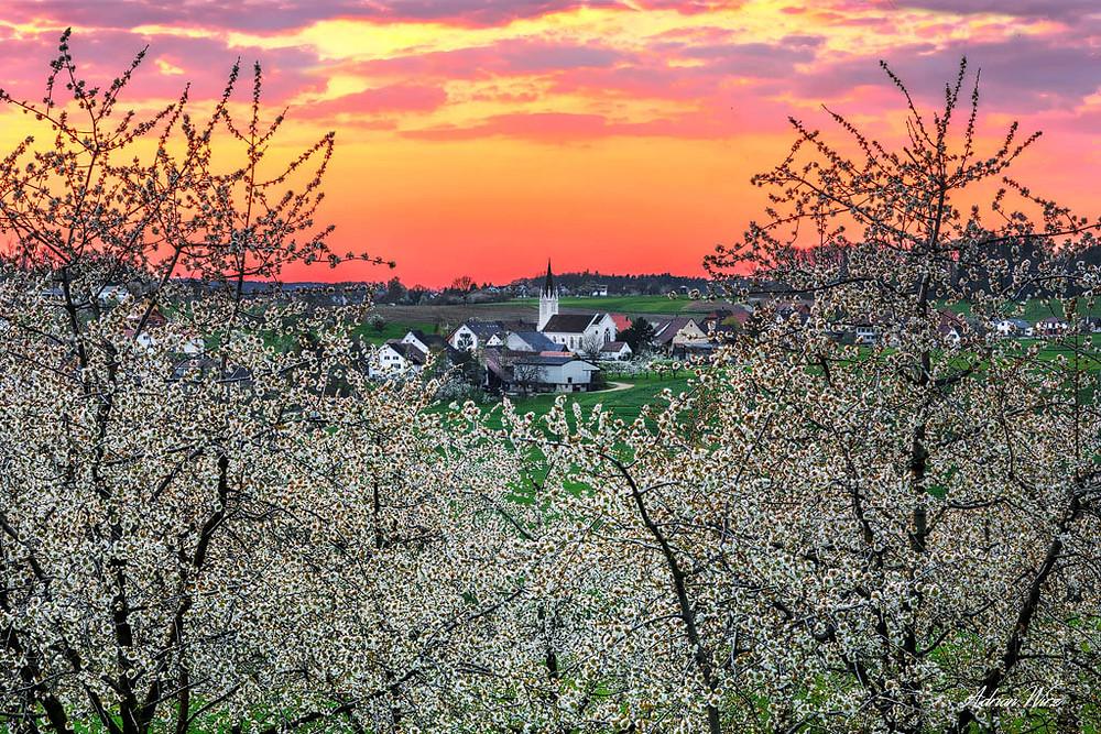 Sonnenuntergang bei Kilchberg