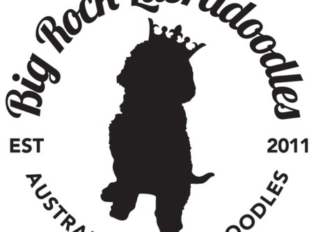 Big Rock Labradoodles Newsletter 1st Quarter 2020