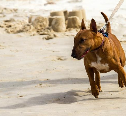Does Your Dog Lunge on Walks? Tips for Controlling this Behavior