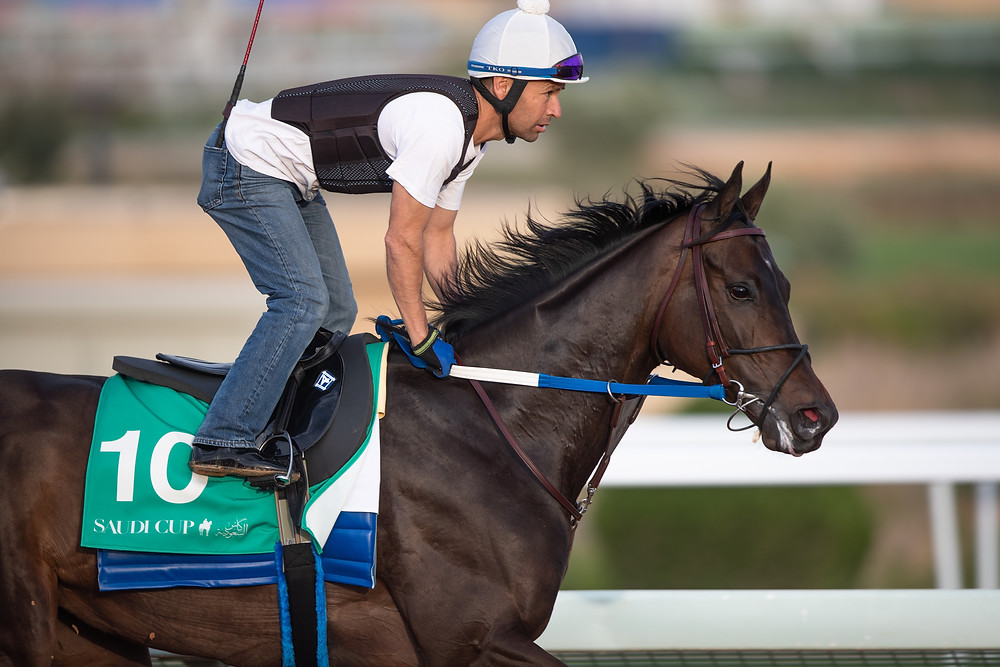 Midnight Bisou prepares to take on the boys in $20 million Saudi Cup.