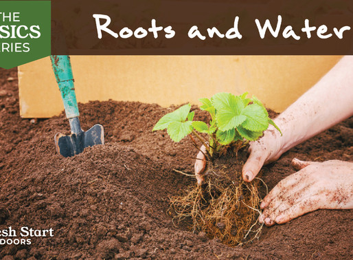 The Basics Series: Roots and Water
