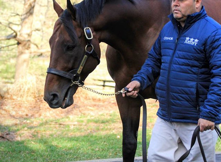 Reflections on Triple Crown winner American Pharoah on his 8th Birthday