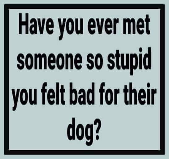 Have you ever met someone so stupid you felt bad for their dog Meme & Many More Memes!