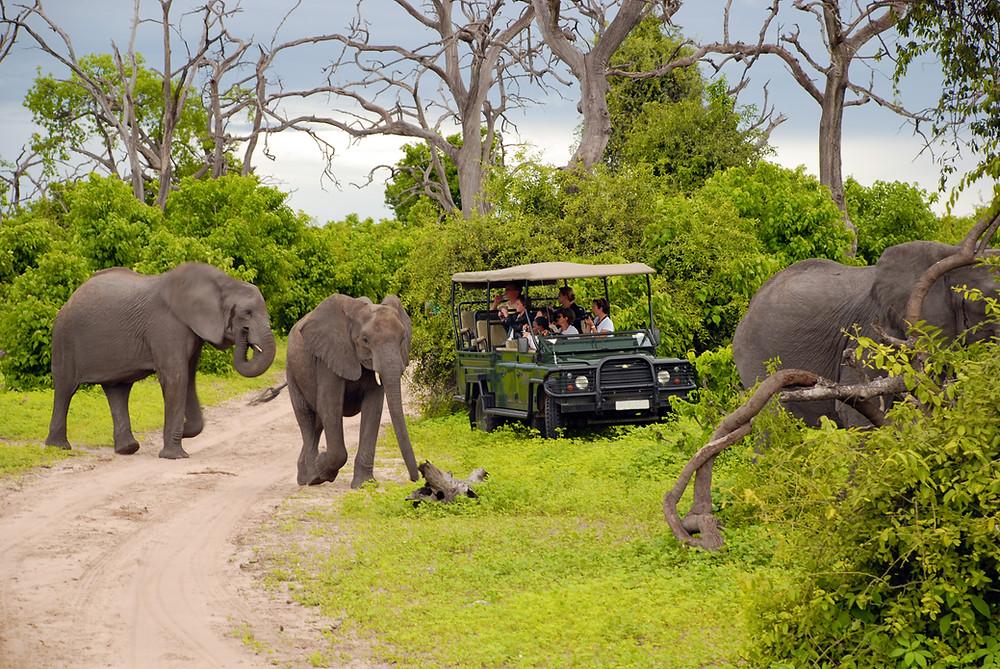 éléphants , animaux sauvages , Botswana ,
