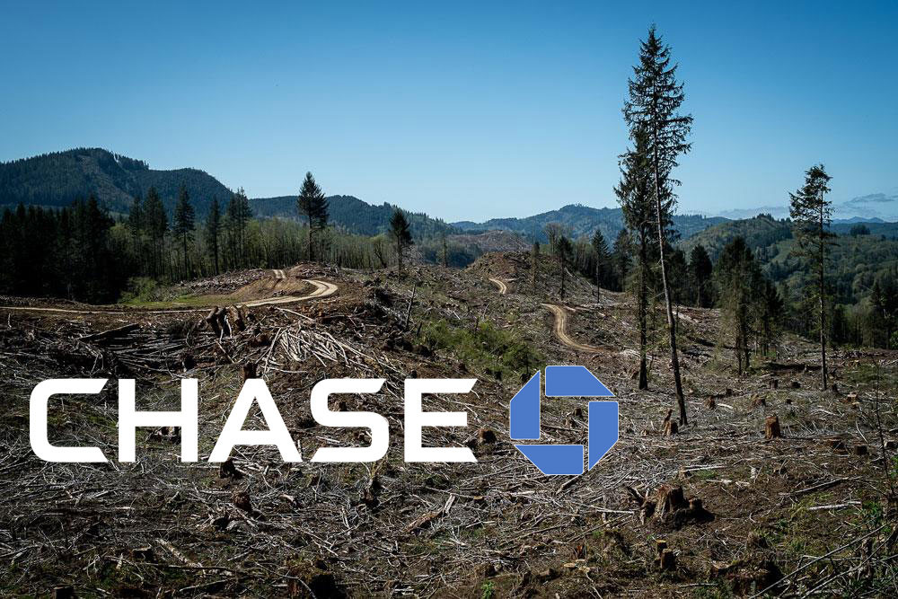 Chase clear-cut forest