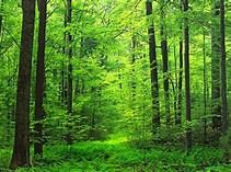 樹を残し森を伐る方法
