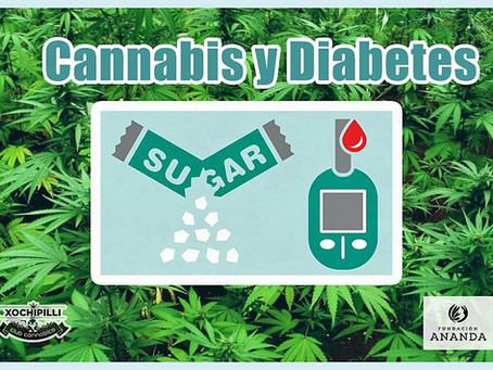 Cannabis y Diabetes