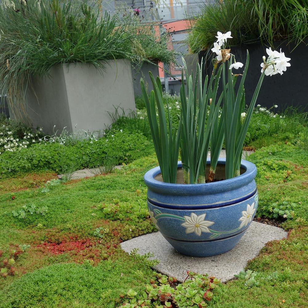 Některé rostliny, třeba netřesky, není nutné zavlažovat vůbec.