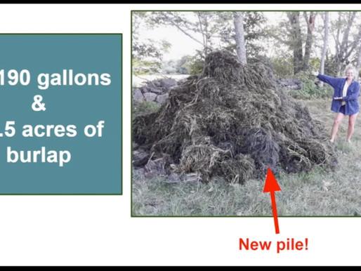 2020 Invasive Milfoil Remediation: Recap
