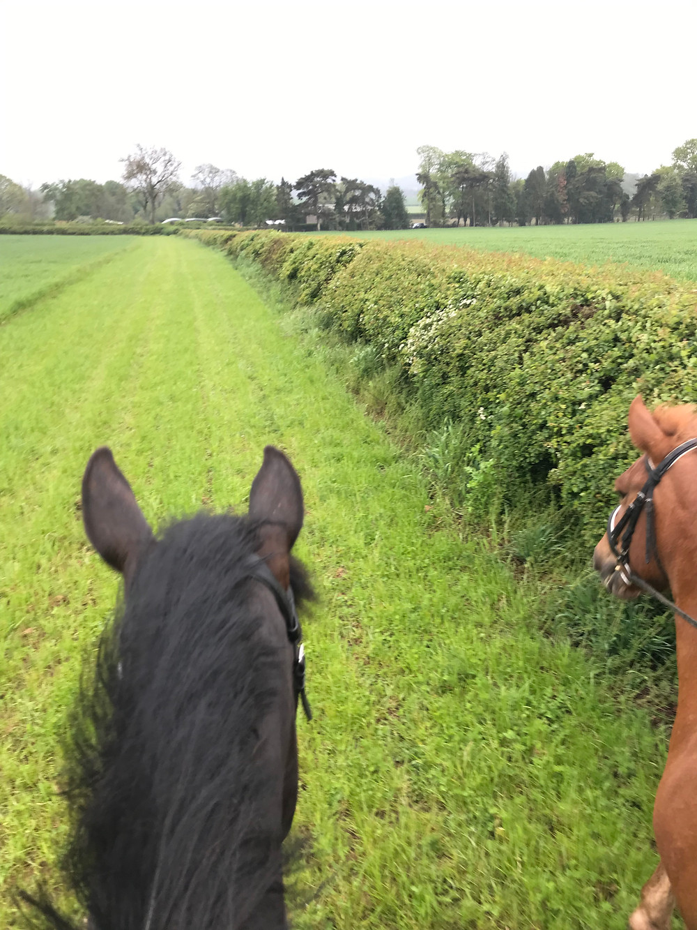 Horse riding in the beautiful Leicestershire countryside