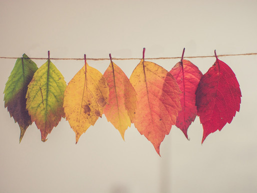 Make your own fall decorations