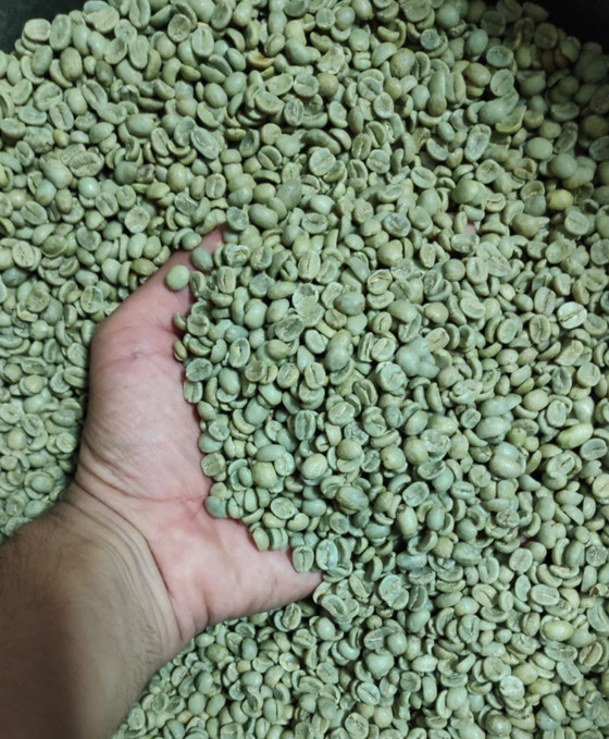 הירוק היום ירוק מאוד - סוד הקפה הירוק