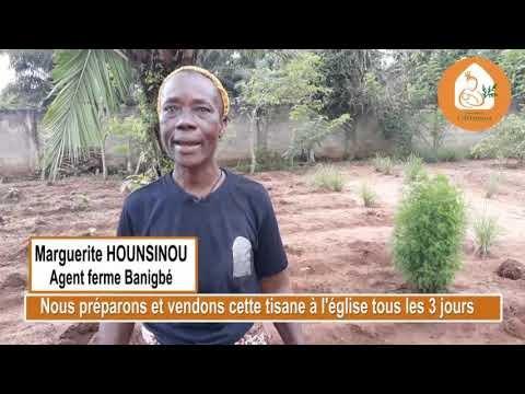 Ferme agroécologique de la Providence, Baningbé- Bénin- Culture de l'Artemisia