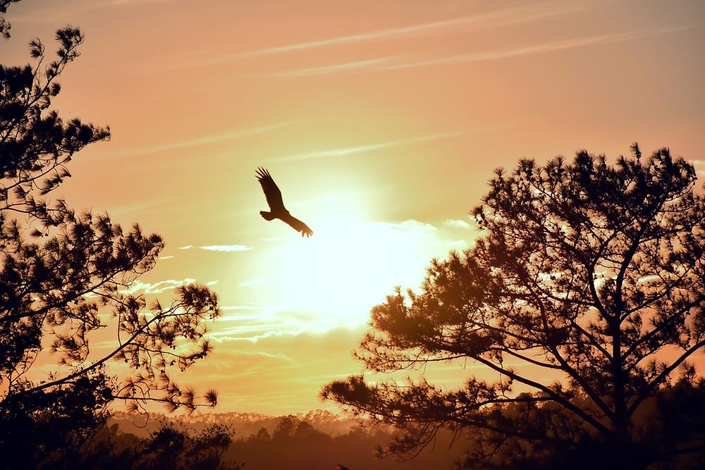 Eagle flying in sunset | www.AlwaysChoose.com