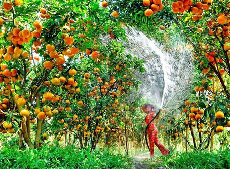 Посадка фруктового сада для себя