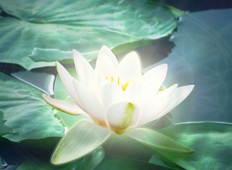 Lotus of Control, Surrender and Flow
