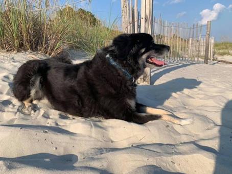 Happy Doggie in the Dunes