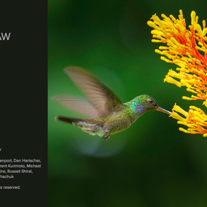 ON1 Photo RAW 2018.5 Release
