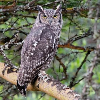 Shamwari TV special aims to heighten interest in Birding Big Day.