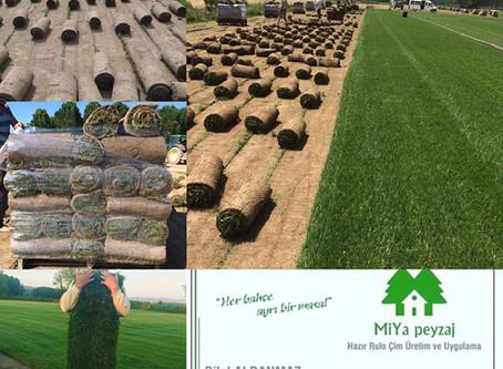 Hazır çimin, ekme çime göre avantajları nelerdir?