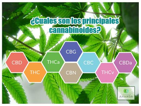 ¿Cuales son los principales cannabinoides?