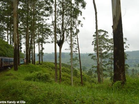 Sri Lanka – À la découverte du pays du thé