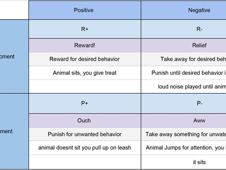 How animals learn | The four Quadrants