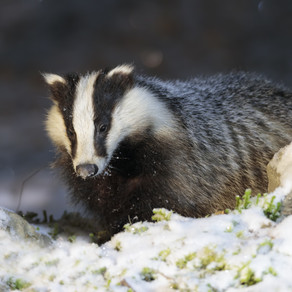 Could you be a Badger Trust Trustee?