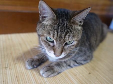 先住猫の憂鬱